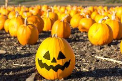 Pumpkin patch in California. Stock Images
