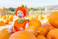 Pumpkin patch Royalty Free Stock Images