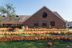 Pumpkin patch church Pearland stock photo
