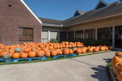 Pumpkin patch church Pearland stock photos