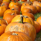 Pumpkin patch close up picture stock image