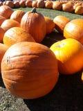 Pumpkin Patch Close-up Stock Images