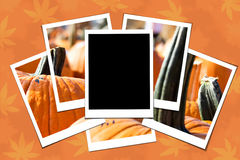 Pumpkin patch collage Stock Photo