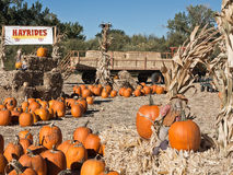 Pumpkin Patch complete with a hay ride. Colorful Pumpkin Patch and hay ride at harvest time Stock Photo