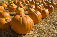 Pumpkin patch corner Royalty Free Stock Image