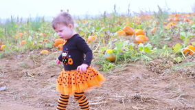 Pumpkin patch. Cute baby girl picking her pumpkin for Halloween stock video