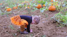 Pumpkin patch. Cute baby girl picking her pumpkin for Halloween stock video footage
