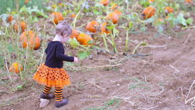 Pumpkin patch. Cute baby girl picking her pumpkin for Halloween stock footage