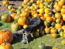 Pumpkin patch display stock photo