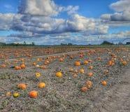 Free Pumpkin Patch Fall Warm Beautiful Royalty Free Stock Photo - 165129315