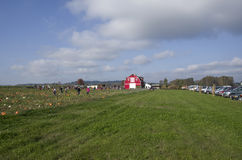 Pumpkin patch farm royalty free stock photography