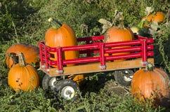 Pumpkin patch farm Stock Photography