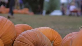 Pumpkin patch festival Stock Photography