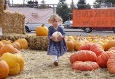 Pumpkin patch girl Stock Photography