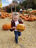 Pumpkin patch girl stock photo