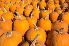 Pumpkin Patch Goodies Stock Image
