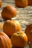 Pumpkin Patch. Group of pumpkins on farm Royalty Free Stock Photos