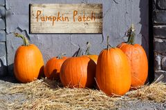 Pumpkin patch. Halloween pumpkins on straw with a wooden Pumpkin patch sign royalty free stock image