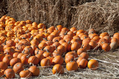 Pumpkin Patch & Hay Bales Royalty Free Stock Photo