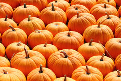 Pumpkin patch for holiday season. Pumpkins on a ladder. Background picture Royalty Free Stock Photos