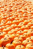 Pumpkin patch for holiday season. Pumpkins on a ladder. Background picture Stock Photography