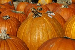 Pumpkin Patch II Stock Photography