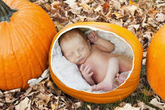 Pumpkin patch kid Royalty Free Stock Photo
