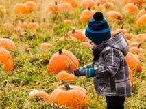 Pumpkin patch Stock Photo