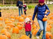 Pumpkin patch Stock Photography