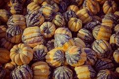 Pumpkin patch. Stock Photography
