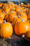 Pumpkin patch. Royalty Free Stock Photography