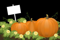 Pumpkin Patch at Night With Sign Royalty Free Stock Photography
