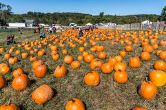 Pumpkin Patch. North Salem, NY - September 25, 2016, people in the pumpkin patch at Outhouse Orchard Stock Image