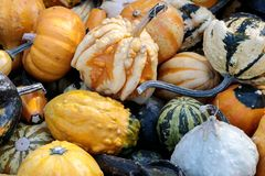 Assortment of Gourd on display Royalty Free Stock Photo