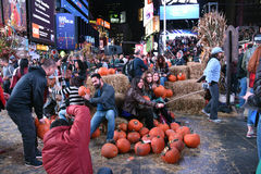 Pumpkin Patch NYC Stock Image