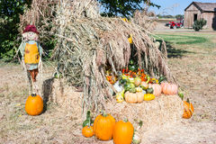 Pumpkin patch. October is pumpkin patch time Royalty Free Stock Photo