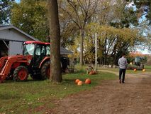 Pumpkin Patch. Pumpkins in the fall at the pumpkin patch. Oakville ontario October 2014 Stock Photo
