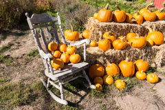 Pumpkin Patch and rocking chair Royalty Free Stock Images
