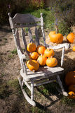 Pumpkin Patch and rocking chair Royalty Free Stock Photography