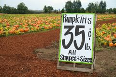 Pumpkins for sale at farm. Pumpkin patch with for sale sign reading $0.35 per pound for any shape or size Royalty Free Stock Image
