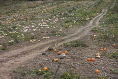 Pumpkin patch in Southwest Virginia Royalty Free Stock Image