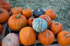 Pumpkin Patch. A stack of pumpkins of different colors in a field Royalty Free Stock Image