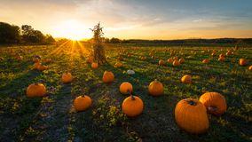Pumpkin patch at sundown stock photography