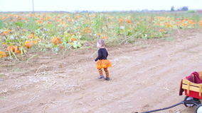 Pumpkin patch. Toddler in Halloween costume playing at the pumpkin patch stock video footage