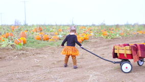 Pumpkin patch. Toddler in Halloween costume playing at the pumpkin patch stock video