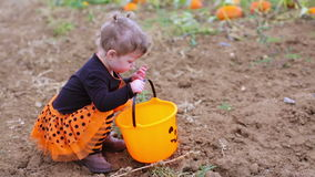 Pumpkin patch. Toddler in Halloween costume playing at the pumpkin patch stock footage