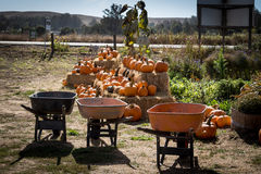 Pumpkin Patch  and Wheel barrow display. In the evening light Royalty Free Stock Images