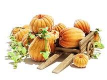 Pumpkin patch Stock Photos