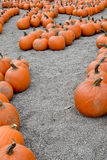 Pumpkin Path Stock Image