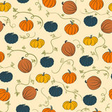 Pumpkin pattern. Colored pumpkins Royalty Free Stock Photos